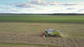 Vogelperspektivegrün- und weißeerntemaschine erfasst Weizen auf Feld stock video footage
