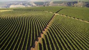 Vogelperspektivekaffeeplantage in Minas Gerais staats- Brasilien Stockbilder