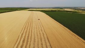 VogelperspektiveMähdrescher erfasst die Weizenernte Weizen, der Scheren erntet Mähdrescher in der FeldLebensmittelindustrie stock video