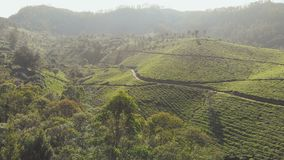 Vogelperspektiveteeplantagen von Indien Kerala-Staat Nahe dem See Matupetty stock footage