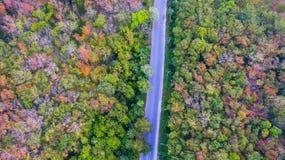 Vogelperspektivewälder ändern Farbe Stockfotos