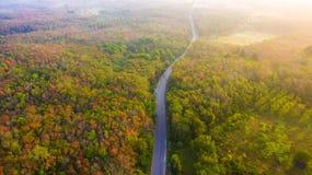 Vogelperspektivewälder ändern Farbe Lizenzfreie Stockbilder