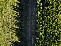 Vogelperspektivewald- und -feldessonniger Tag Foto vom Brummen Lizenzfreie Stockfotos