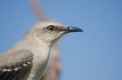 Vogelporträt Lizenzfreie Stockfotos