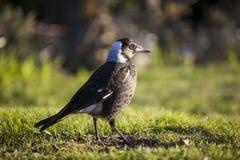Vogelportret Stock Foto