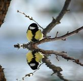 Vogelreflexion lizenzfreies stockfoto