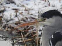 Vogelreiger Royalty-vrije Stock Fotografie
