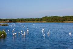 Vogelreservaat Royalty-vrije Stock Foto