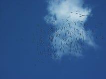 Vogels Royalty-vrije Stock Afbeeldingen