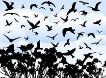 Vogels Stock Foto