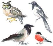 Vogels Royalty-vrije Stock Fotografie
