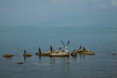 Vogels bij het meer Royalty-vrije Stock Fotografie