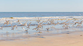 Vogels bij het strand Royalty-vrije Stock Afbeeldingen