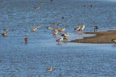 Vogels bij meerkust Stock Foto's