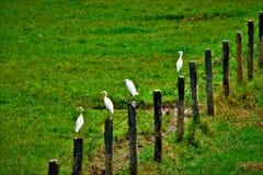 Vogels bovenop de postomheining royalty-vrije stock fotografie