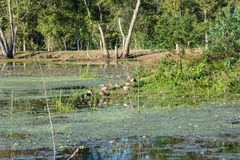 Vogels in Brazos-het Park van de Krommingsstaat dichtbij Houston, Texas royalty-vrije stock foto's