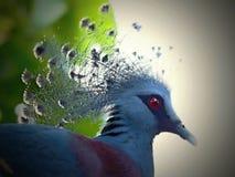 Vogels in Chester stock afbeeldingen