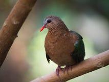 Vogels in Chester royalty-vrije stock afbeeldingen