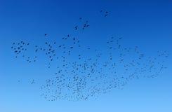 Vogels in de hemel Stock Afbeeldingen