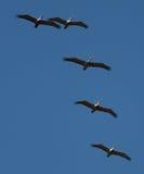Vogels in de hemel royalty-vrije stock afbeelding