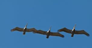 Vogels in de hemel royalty-vrije stock foto's
