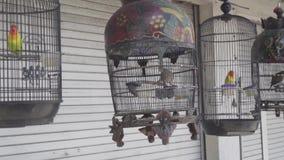 Vogels in de kooi stock footage
