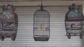 Vogels in de kooi stock videobeelden