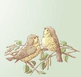 Vogels in de lente Royalty-vrije Stock Foto