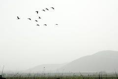 Vogels in de mist Royalty-vrije Stock Afbeelding