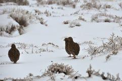 Vogels in de Sneeuw royalty-vrije stock afbeeldingen
