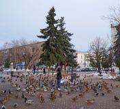 Vogels in de stad royalty-vrije stock afbeelding