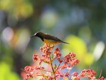 Vogels in de tuin mooie bloemen Royalty-vrije Stock Fotografie