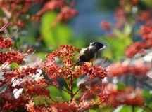 Vogels in de tuin mooie bloemen Stock Foto