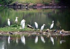 Vogels in de vijver; natuurlijke schoonheid Stock Foto