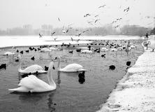 Vogels in de winter Royalty-vrije Stock Afbeelding