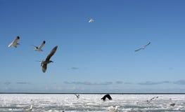 Vogels in de Winter Stock Afbeelding
