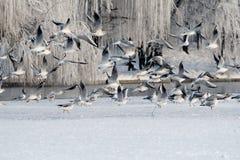 Vogels in de winter Royalty-vrije Stock Fotografie