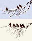 Vogels in de winter en in de lente Stock Afbeeldingen