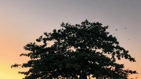 Vogels die aan de boom vliegen stock video
