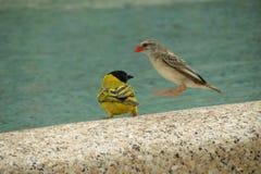Vogels die binnen komen te landen Stock Fotografie