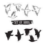 Vogels die in de hemel vliegen Vector zwarte pictogrammen vector illustratie