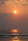 Vogels die de oceaan kruisen Stock Foto's