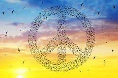 Vogels die in de vorming van het vredessymbool bij zonsonderganghemel vliegen Royalty-vrije Stock Foto's