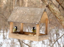 Vogels die in de Winter voeden Stock Foto's
