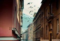 Vogels die in een historische smalle straat vliegen stock afbeeldingen