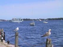 Vogels die een onderbreking op pijler hebben bij meer Ontario Toronto Canada royalty-vrije stock afbeelding