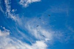 Vogels die hoog in de blauwe hemel vliegen Stock Afbeeldingen
