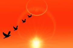 Vogels die huis vliegen Royalty-vrije Stock Afbeelding