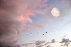 Vogels die Maan vliegen stock fotografie