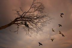 Vogels die met dode boom vliegen Royalty-vrije Stock Afbeeldingen